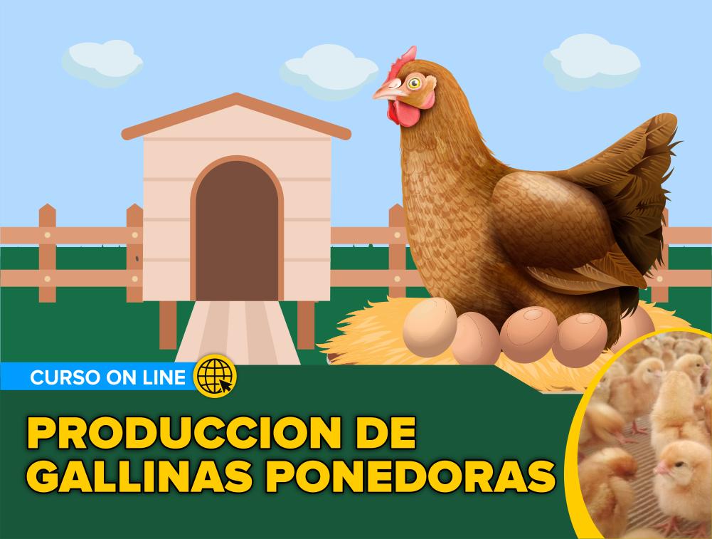 Curso On Line: Producción de Gallinas Ponedoras