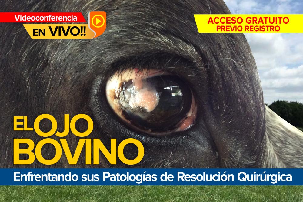 El Ojo Bovino: enfrentando sus patologías de resolución quirúrgica