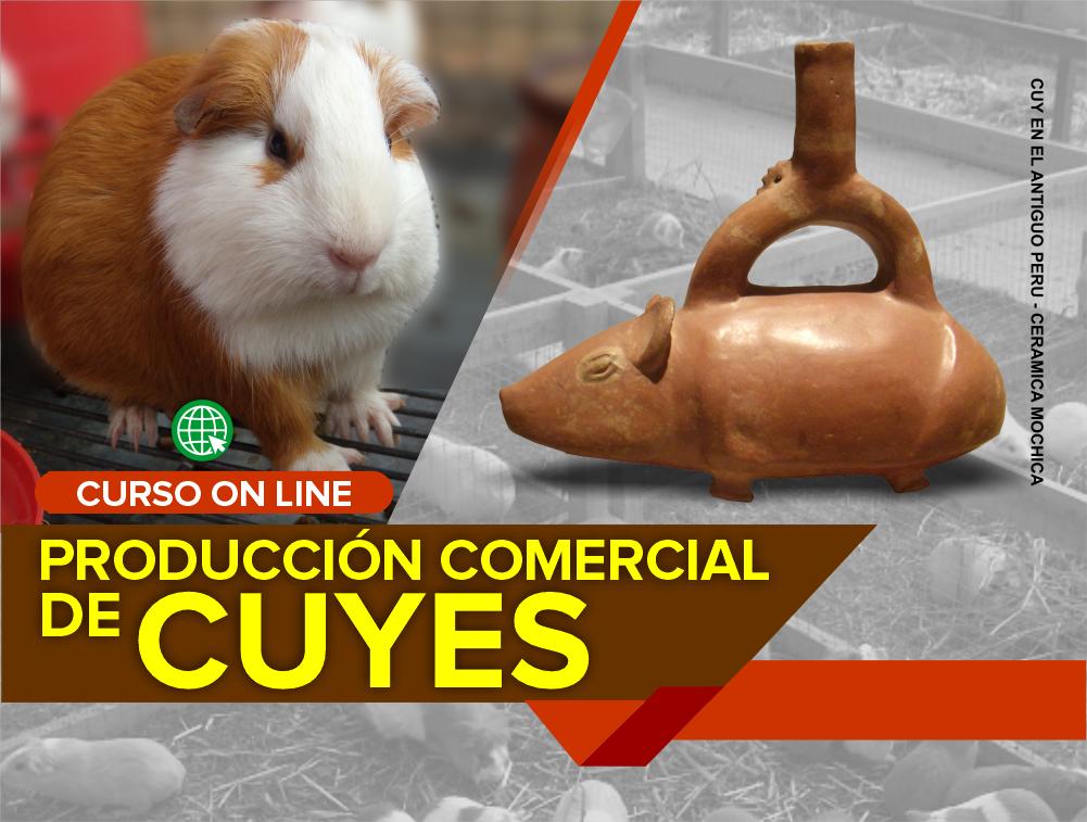 Curso On Line: Producción Comercial de Cuyes