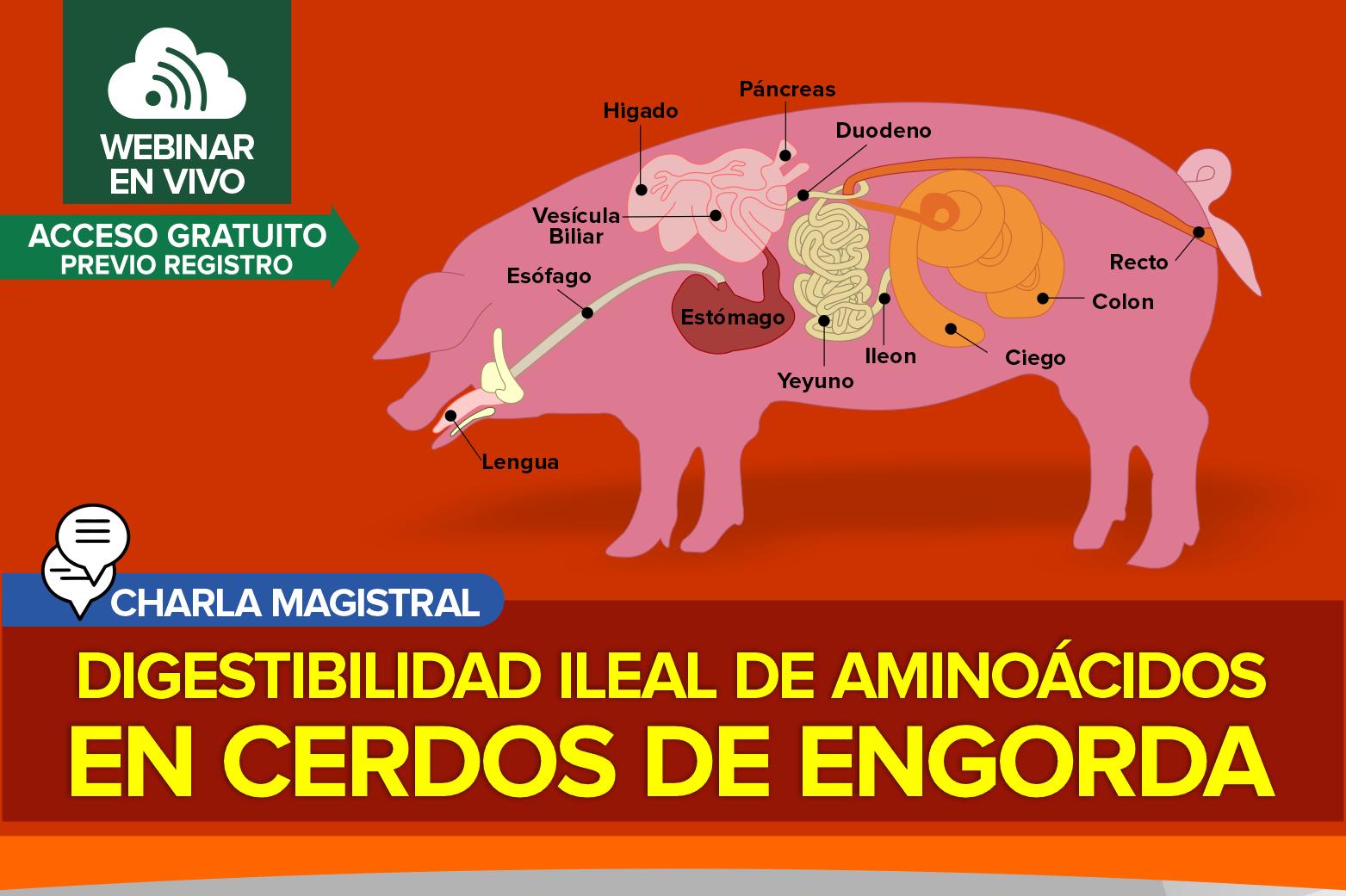 Digestibilidad Ileal de Aminoácidos en Cerdos de Engorda