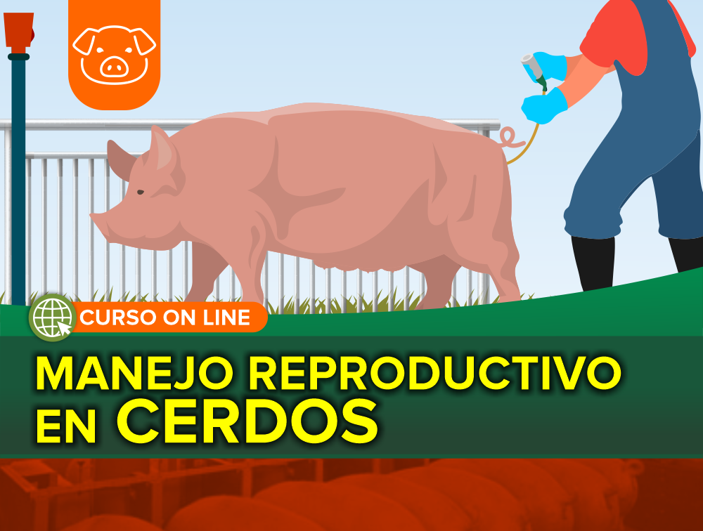 Curso On Line: Manejo Reproductivo en Cerdos
