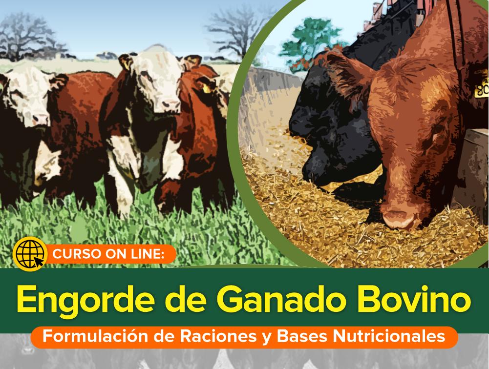Curso On Line: Engorde de Ganado Bovino – Formulación de Raciones y Bases Nutricionales