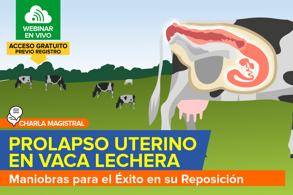 Prolapso Uterino en Vaca Lechera