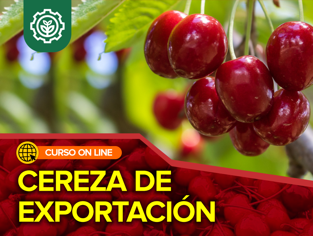 Curso On Line: Cereza de Exportación