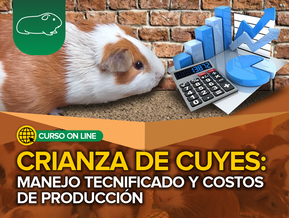 Curso On Line: Crianza de Cuyes – Manejo Tecnificado y Costos de Producción