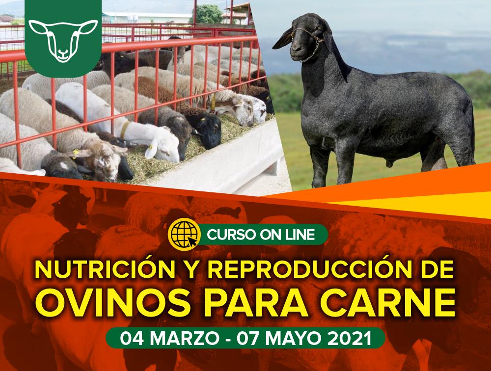 Curso On Line: Nutrición y Reproducción de Ovinos para Carne