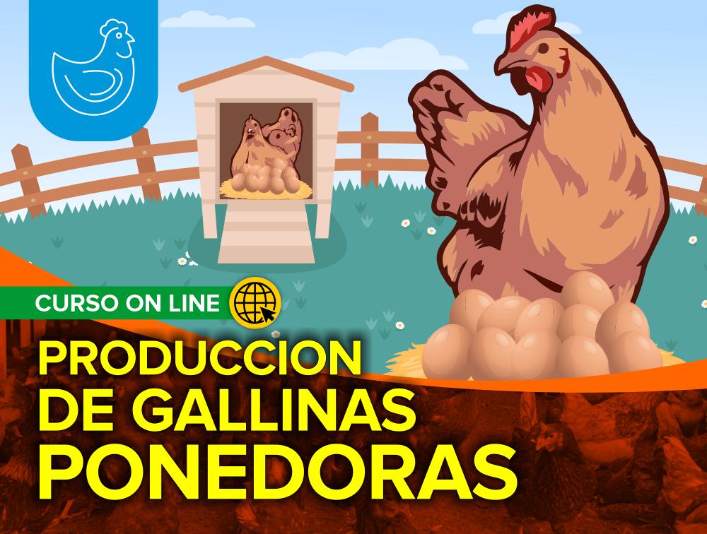 Curso On Line: Producción de Gallinas Ponedoras 2021