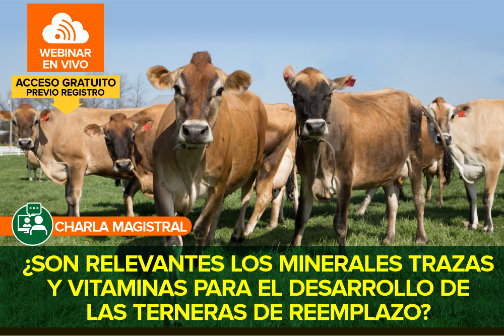 ¿Son relevantes los minerales trazas y vitaminas para el desarrollo de las terneras de reemplazo?