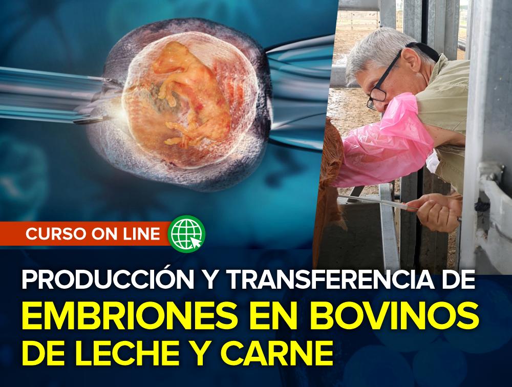 Curso On Line: Producción y Transferencia de Embriones en Bovinos de Leche y Carne