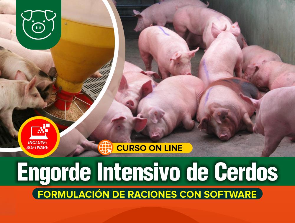 Curso On Line: Engorde Intensivo de Cerdos – Formulación de Raciones + Software