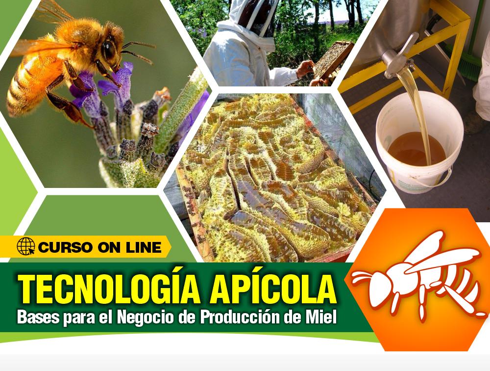 Curso On Line: Tecnología Apícola – Bases para el Negocio de Producción de Miel