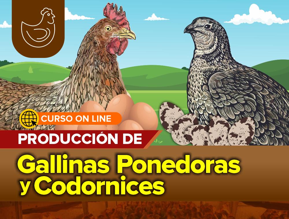 Curso On Line: Producción de Gallinas Ponedoras y Codornices